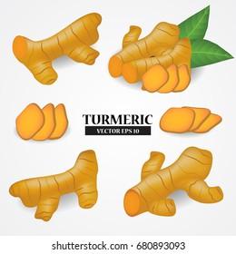 turmeric vector illustration