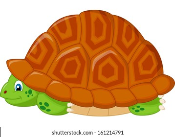 Turtle hiding in his shell