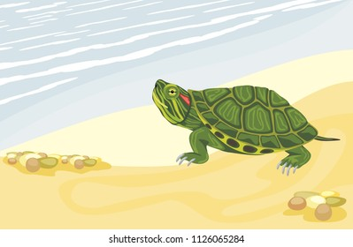 Turtle on the sandy shore. Vector