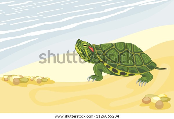 turtle-on-sandy-shore-vector-600w-112606
