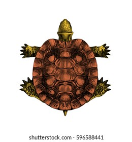 turtle top view, carapace, crawling, sketch, vector, color illustration