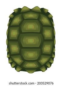 Turtle, tortoise shell, turtle shell