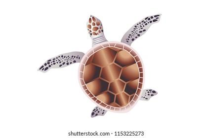 Turtle, Vector Illustration, Isolated