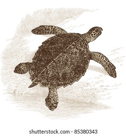 "turtle - vintage engraved illustration - ""Histoire naturelle"" by Buffon and Lacépède published in 1881 France"