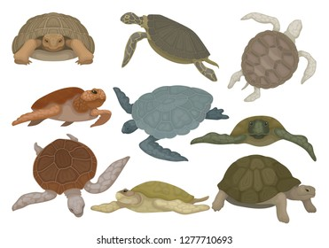 Turtles in various views set, tortoise reptile animals vector Illustration on a white background