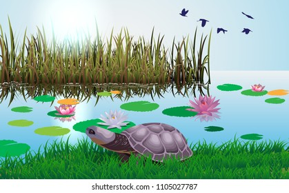 The turtles are walking in the marsh with the lotus.