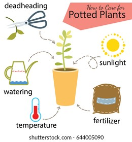 Tutorial how to care for potted plant. Succulents inside glass terrarium, elements for care florarium: deadheading, watering, temperature, fertilizer, sunlight. Vector illustration