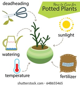 Tutorial how to care for potted plant. Succulents in pot, elements for care: deadheading, watering, temperature, fertilizer, sunlight. Vector illustration