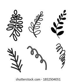 Twigs, leaves. Isolated graceful plants for design. Set of black vector illustrations on a white background. Can be used as design elements for invitations, greetings, decoration