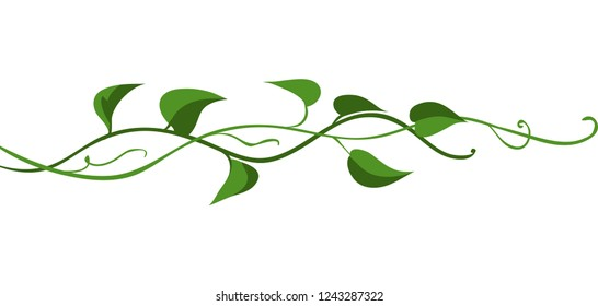 Twisted wild liana branch. Jungle vines plant. Woody natural tropical rainforest.