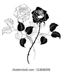 two artistically drawn black roses on a white background.