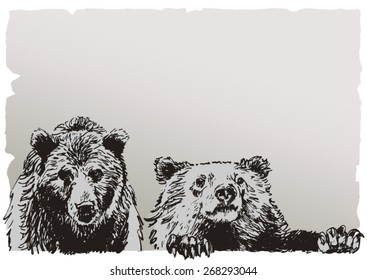 Two bears, realistic drawing on old parchment paper background. Hand drawn vector illustration.