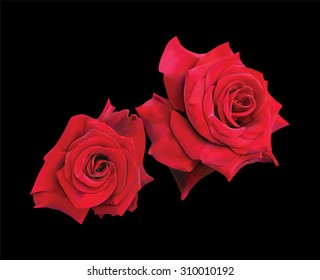 Two Beautiful Red Roses Isolated On Black Background. Photo realistic vector illustration.