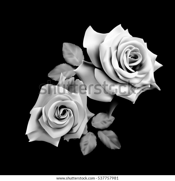 93a9c31a0 Two beautiful roses isolated on black background. Monochrome vector  illustration.
