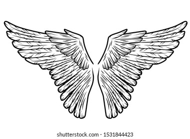 Two bird wings in vector isolated on white background