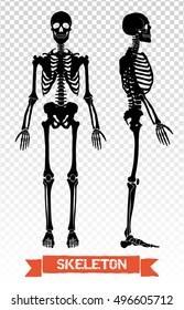 Two black human skeleton silhouettes front and side view isolated on transparent background flat vector illustration