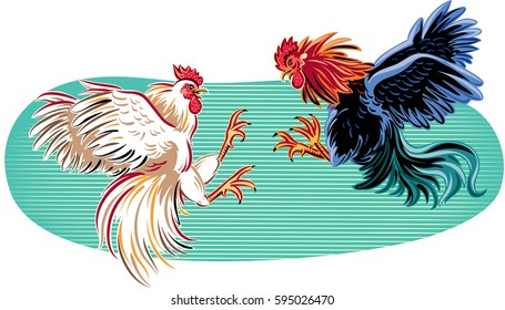 Two cocks facing each other in a fight.