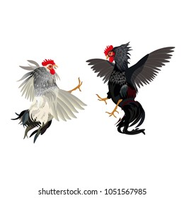 Two cocks fighting. Vector illustration isolated on white background