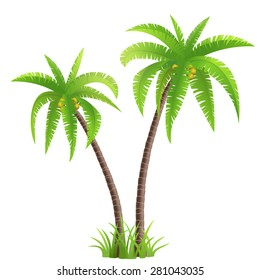 Two coconut palm trees with grass isolated on white background