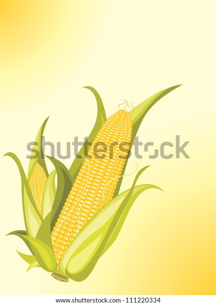 two-corncobs-on-yellow-background-600w-1