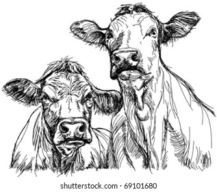 two cows - black and white sketch