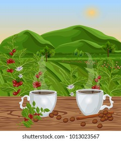 Two cups of coffee with landscape view Vector. Green fields of Coffee beans harvests