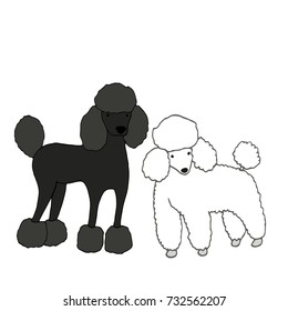 Two cute, beautiful dogs, one black, second white, isolated on white background, vector hand drawing, cartoon style, illustration pets fanny poodle.