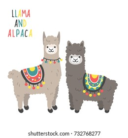 Two cute llamas standing and smiling isolated on white background