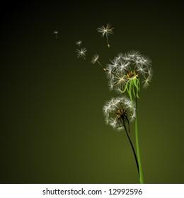 two dandelions in wind on dark background