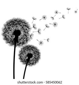 Two delicate black dandelions silhouette with flying fluff on white background. Floral modern stylish wallpaper with summer or spring flowers. Beautiful trendy nature backdrop. Vector illustration