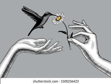 Two female hands with a chamomile flower and a hummingbird. Retro style valentine greeting card design. Vintage color engraving stylized drawing. Vector  illustration