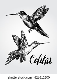 Two flying colibri birds. Hand drawn Vector illustration.