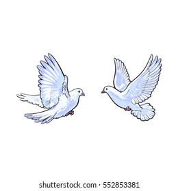 Two free flying white doves, sketch vector illustration isolated on white background. Realistic hand drawn couple of white doves, pigeons flapping wings, symbol of love and romance, marriage icon