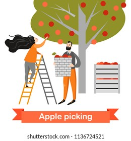 Two funny cartoon characters are picking apples in the garden. Harvest time. Vector illustration on a white background