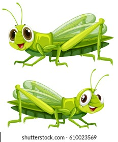 Two grasshoppers with happy face illustration