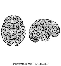 Two gray color human brain silhouettes isolated on white background. Fingerprint silhouette human brain identification