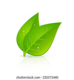 Two green leaves with fresh dew drops realistic image icon for pharmaceutical eco products emblem vector illustration