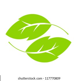 Two green leaves. Vector illustration