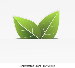 Two green leaves which are sticking out of the cut paper. Vector illustration