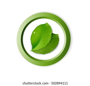 two green realistic leaves in the green circle on white background, eco concept, protect the plant idea, vector