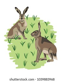 Two hares on grass