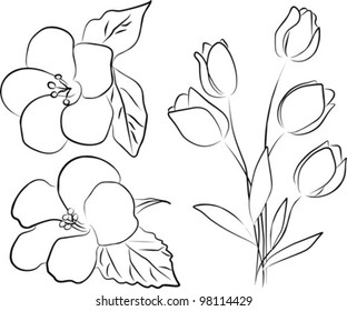 two hibiscus flower and tulip bouquet on a white background, vector illustration