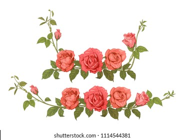 Two horizontal borders of roses. Panoramic view bouquets: branches with pink, red flowers, buds, green leaves, white background. Illustration in engraving vintage sketch style, vector