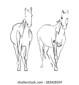 Two horses sketch