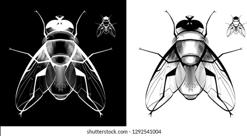 Two Houseflies in black and white