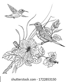 Two hummingbird birds and blooming hibiscus, contour black and white drawing, coloring book for adults and children.