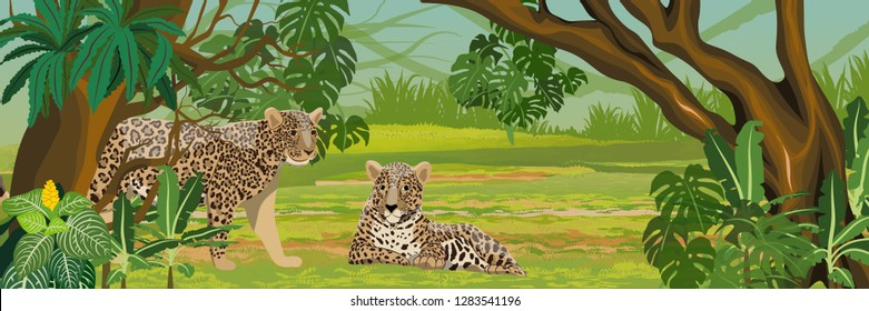 Two jaguars in the jungle. Big cat on the hunt. Amazonia rain forests. Realistic Vector Landscape