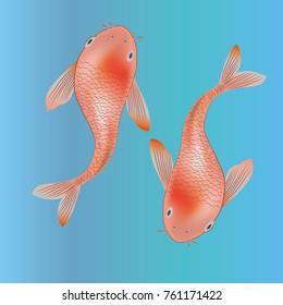 Two koi fishes