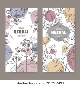 Two labels with Cinchona officinalis aka quinine or Jesuit bark and Crataegus monogyna aka common hawthorn sketch. Green apothecary series. Great for traditional medicine, or gardening.