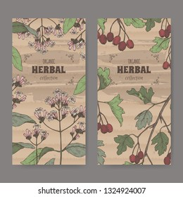 Two labels with Cinchona officinalis aka quinine or Jesuit bark and Crataegus monogyna aka common hawthorn color sketch. Green apothecary series. Great for traditional medicine, or gardening.